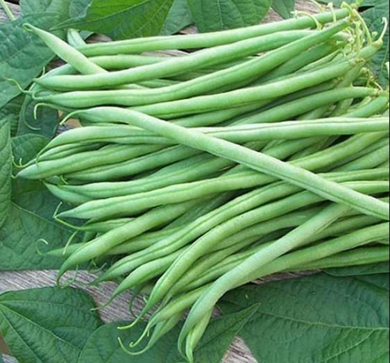 Exotic Bush Beans